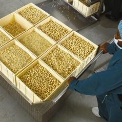 Our nut farm