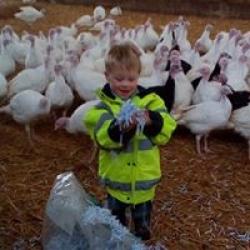 our turkeys