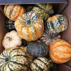 seasonal veg