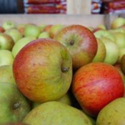 our fresh fruit