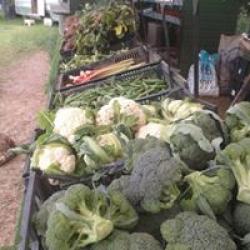 our veg