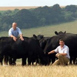 the team and our grazing