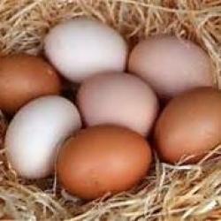 real fresh eggs