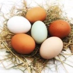 real free range eggs