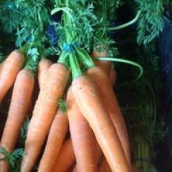 real fresh carrotts