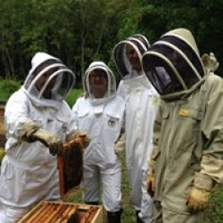 bee keeping courses