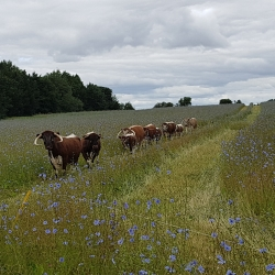 Herb rich meadow