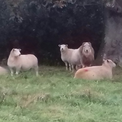 some of our flock