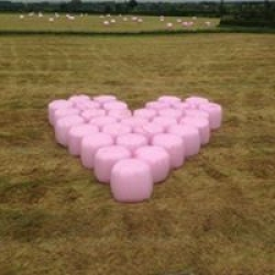 Pink bales for breast cancer UK
