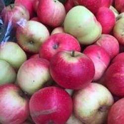 real organic fresh apples