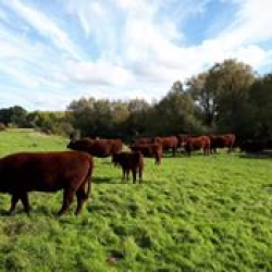grass fed, slow growing, beef