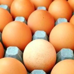 free range eggs