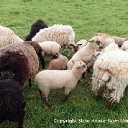 free range grass fed lamb