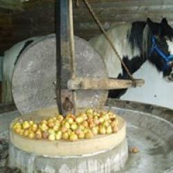 horse driven cider