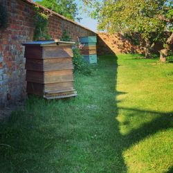 Two of our many organic hives