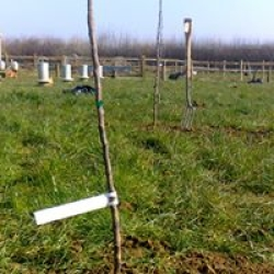 planting our orchard