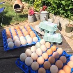 our free range eggs