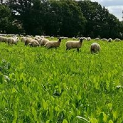 Pasture fed free range