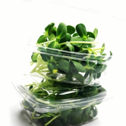 Compostable Packaging or sold in living trays
