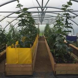 organic specialist veg