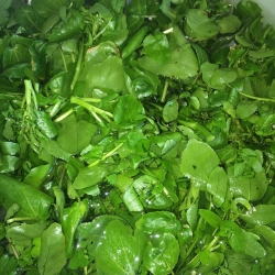 Famously Local Watercress