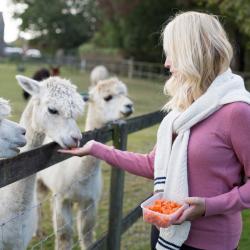 We love alpacas!