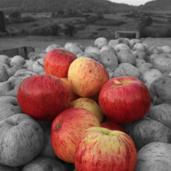 Foxwhelp Real Cider Apples