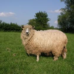 full fleece