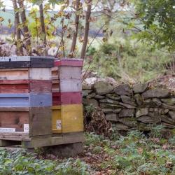 The Monastery apiary