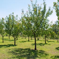 our tree farm
