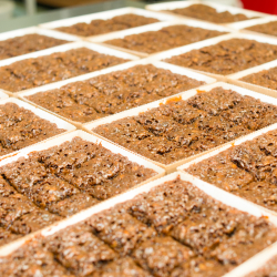 gingerbread cooling