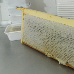 Honey comb waiting to be cut