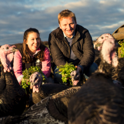 herb-fed-turkeys_edward&emma