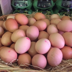 our own free range eggs