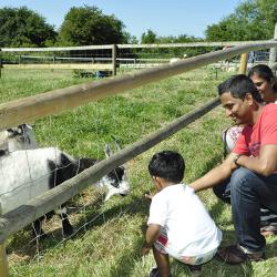 Say hello to the farm animals