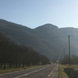 French Walnut Orchard