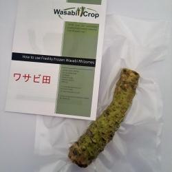 Freshly Frozen Wasabi Rhizome
