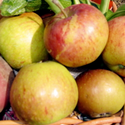 real apples