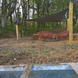 Greedy Pig's Pantry