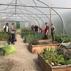 Polytunnel - volunteers at work