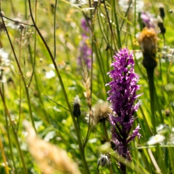 We are working hard to bring the beautiful British meadows that used to be everywhere - here, the pink flowers are orchids