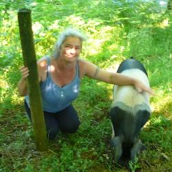 Free ranging pigs
