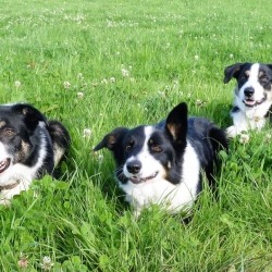 3 Amigos!