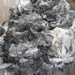 fleece for spinning and felting