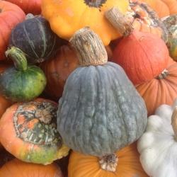 our pumpkin & squash