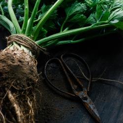 Sturts Organic Celariac