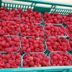 Raspberries in tray