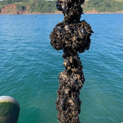 Rope mussels