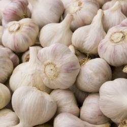 Scottish Garlic
