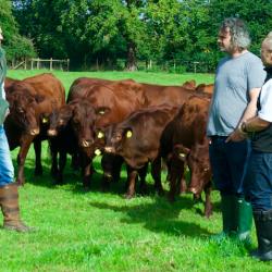 free range grass fed beef